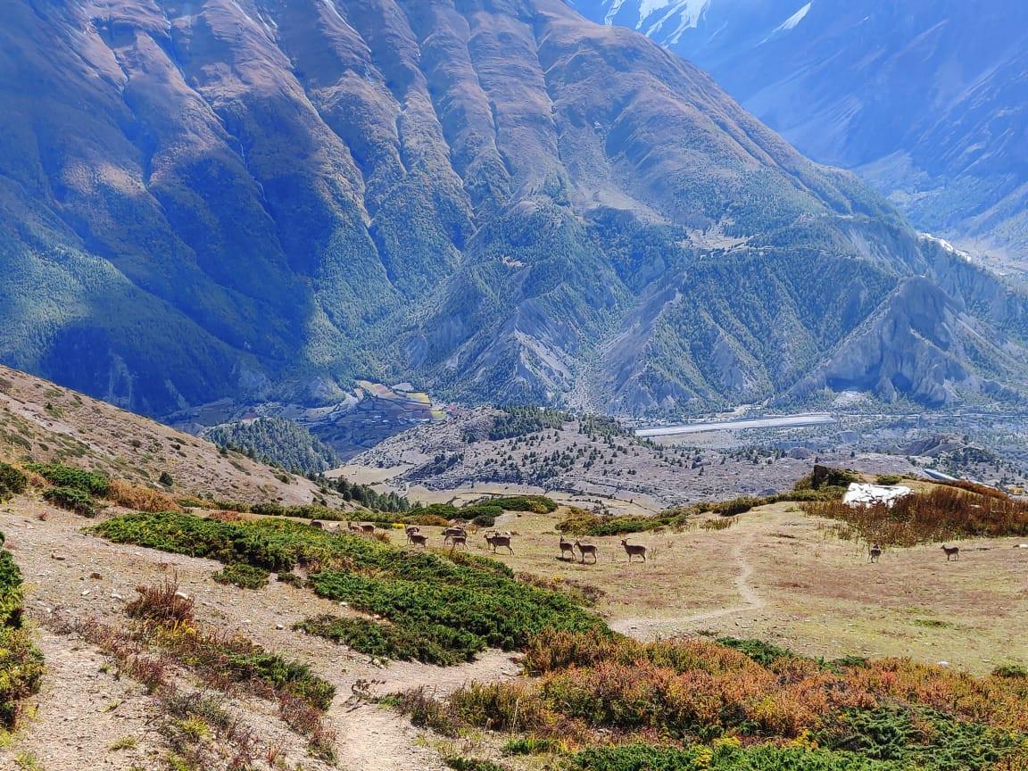 Nar phu valley Kang La pass